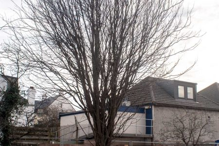 Fife Council, Spare that Tree!